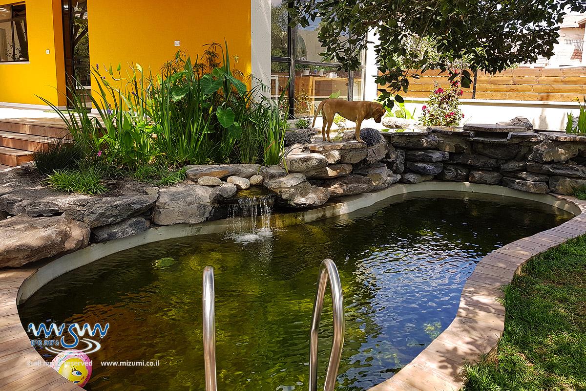 בריכת שחייה אקולוגית טבעית